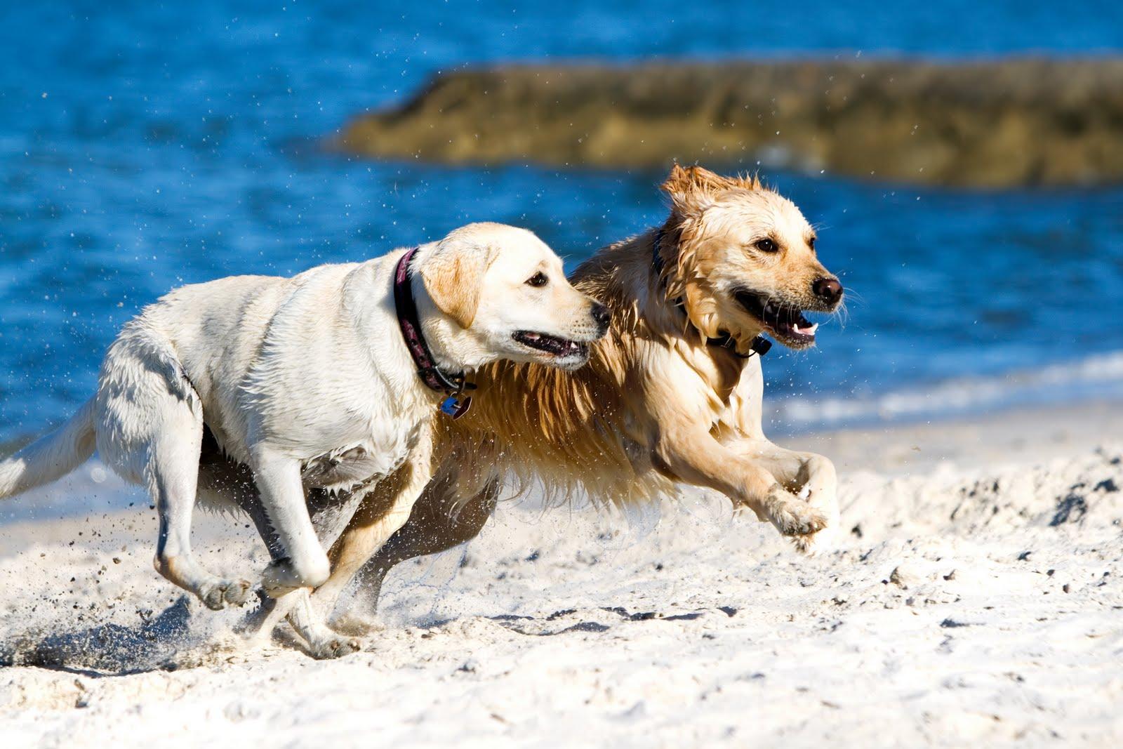 http://2.bp.blogspot.com/-EG443jlrma4/TdDDAcfCGXI/AAAAAAAAAWQ/1Juw10d8zt0/s1600/Cute+Dogs+Pictures+Wallpapers+%252857%2529.jpg