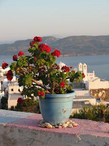 un pizzico di Grecia!