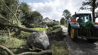 Goedkoop haardhout na stormschade