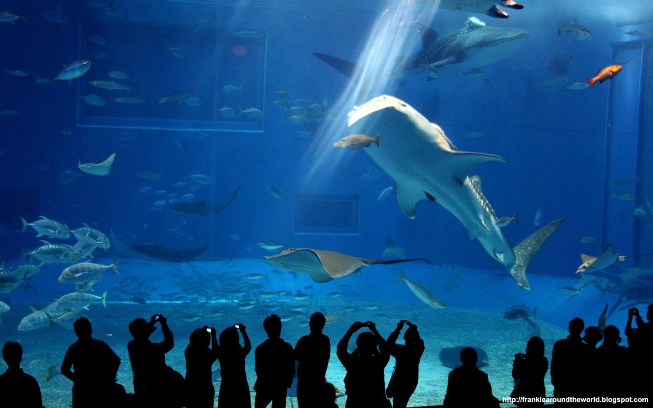 Visiter okinawa japon fond d 39 cran japonais gratuit for Fond ecran aquarium