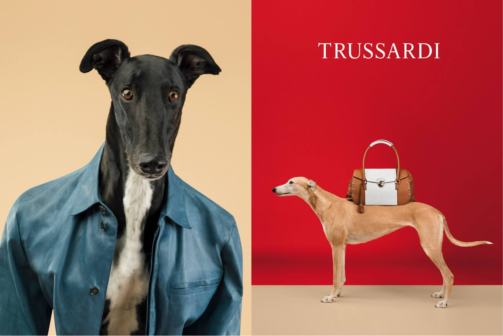 Trussardi Greyhound