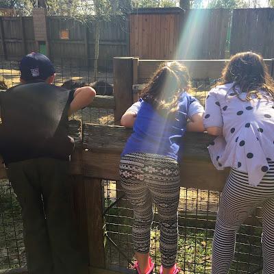 central-fl-zoo-children