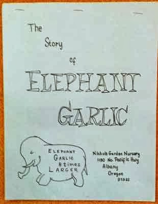 elephant garlic planting instructions