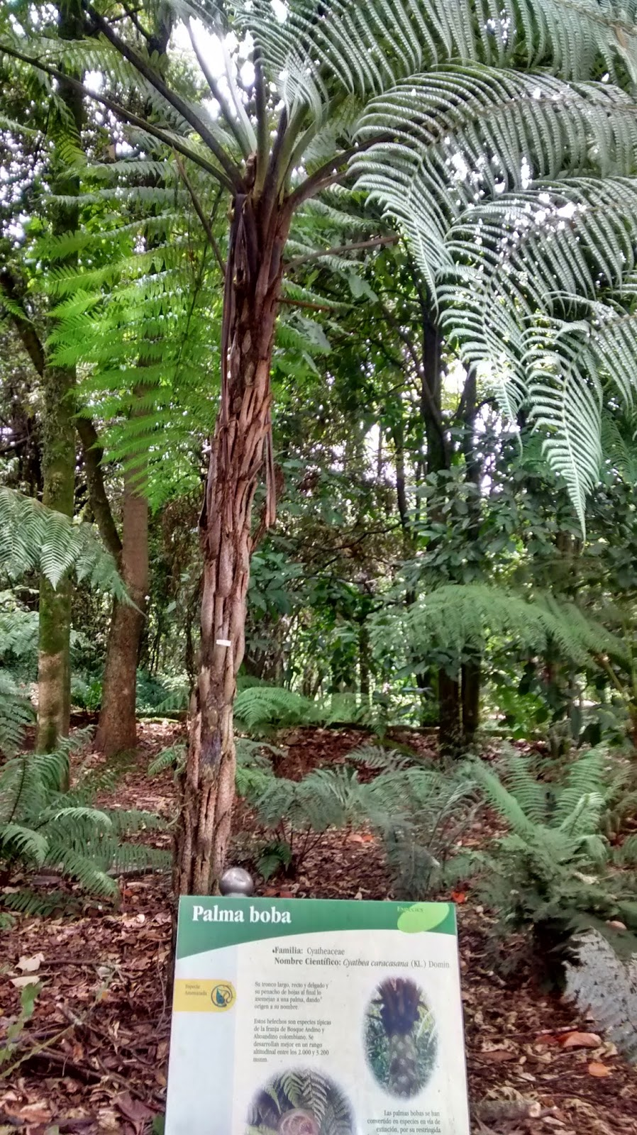 Jard n bot nico jos celestino mutis plantas vistas en el - Jardin botanico las palmas ...