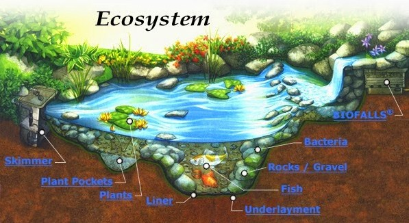 Pengertian Ekosistem dan Komponennya