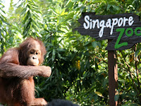 Several Things To Do When Visiting Singapore Zoo