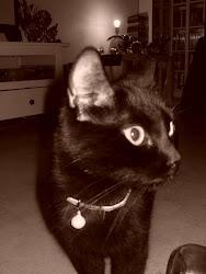 Tussimoren vår :)