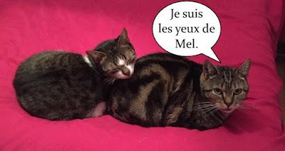 Mel et Momo, deux chats copains pour la vie.