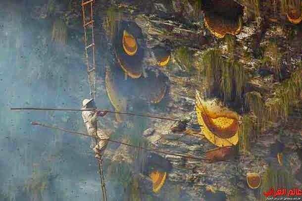 العسل المميت، عالم الغرائب، العجائب والغرائب