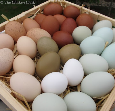 Chicken eggs for blowing and decorating