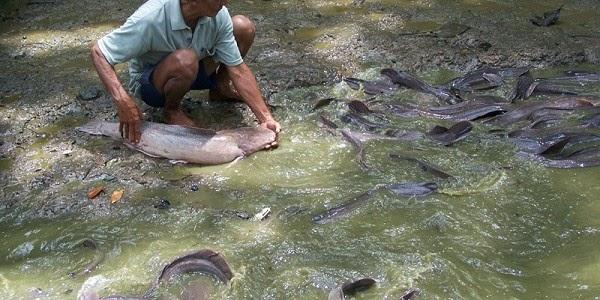 Bupati Kotim Budidayakan Amplang Pipih dan Ikan Jelawat