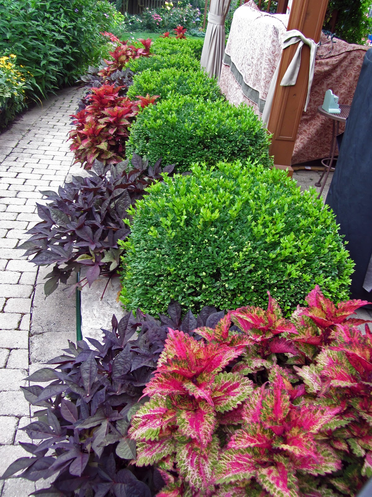 Year round plants for flower beds - I Am In Love With The Color Contrasts Of The Green Velvet Boxwood Paired With The Red Potato Vine And Coleus Wow Google Image Result For Http