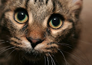 Live Life Like a Cat. . .Inquiringly. Use the power of your subconscious . inquiringly cat face closeup