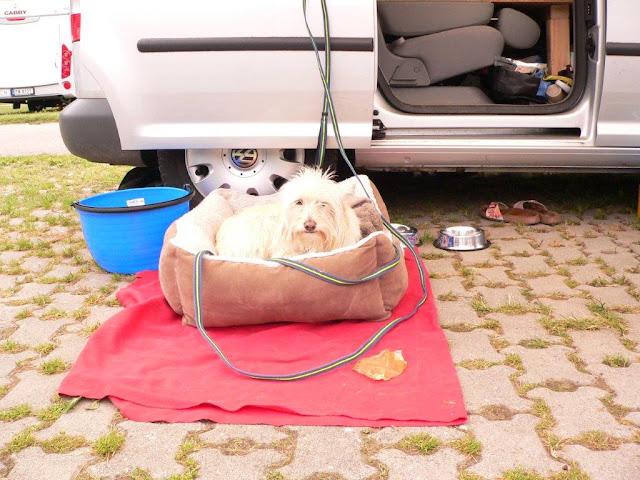Camping Campingtrip Zelten Wohnmobil Wohnwagen Ausrüstung Tips Tipps und Tricks Mina Hund Hundedecke Hundekissen Leine Halsband