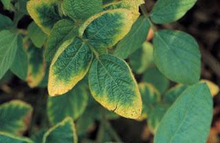 vai trò của photpho với cây trồng