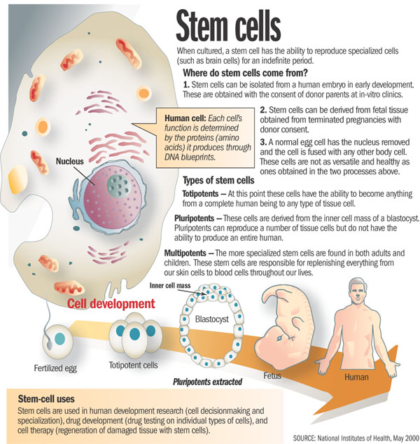 the killing of a living human embryo to obtain that stem cell