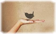 Птица, рука, бёрдвотчинг