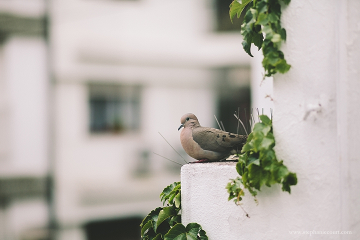 birds-in-argentina