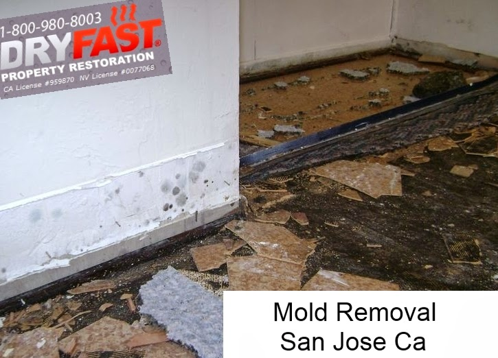 mold removal san jose ca