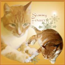 ❤️ Sammy Forever ❤️