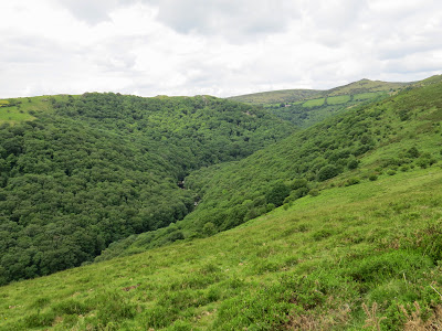 Thick Wooded Valley Picture River Dart