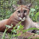 Big Cat Rescue of Tampa, Florida