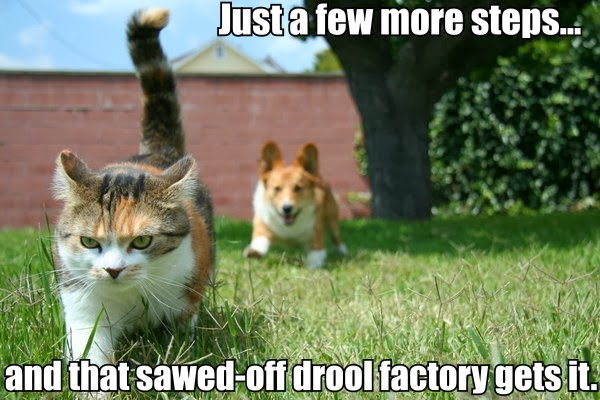Corgi and Cat Meme