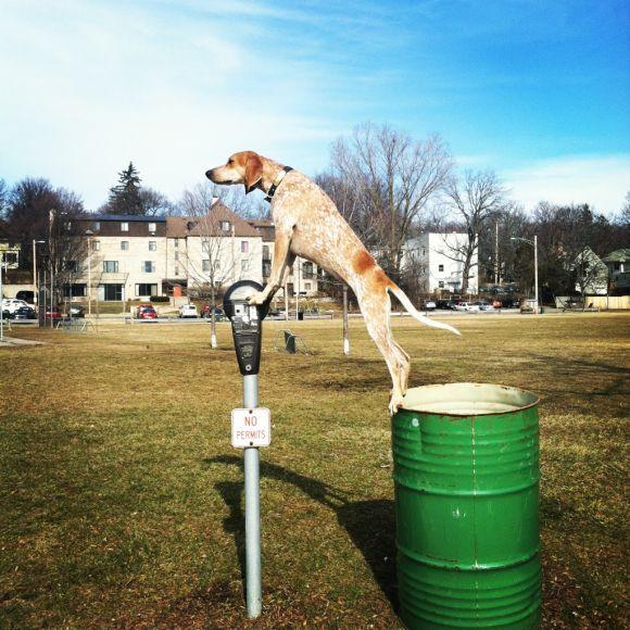 theron humphrey fotografia cachorro em cima de coisas se equilibrando maddie dog on things