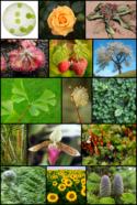 کتاب گیاه شناسی