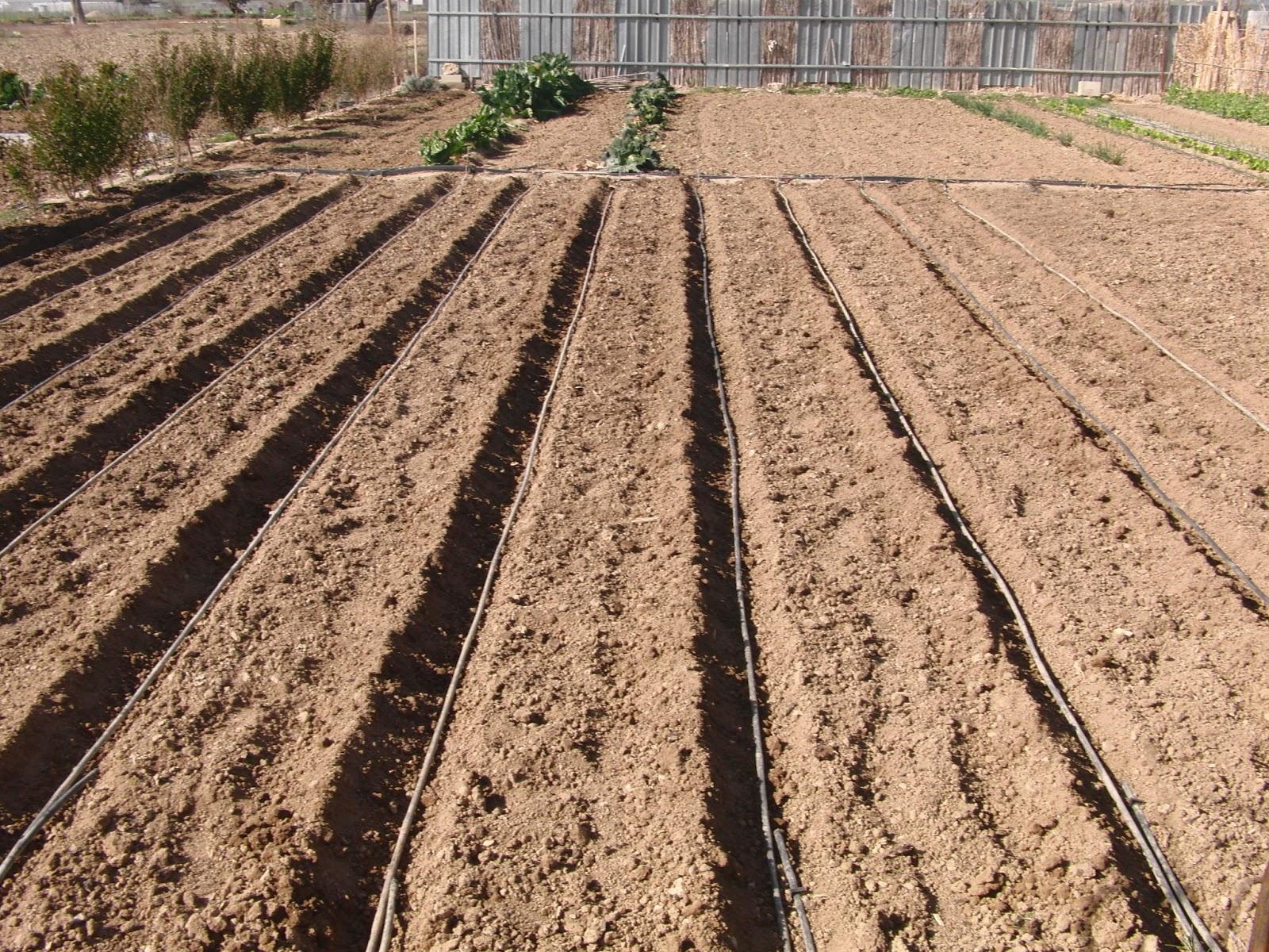 Un huerto familiar sembrar patatas dia 22 febrero for Como cultivar patatas