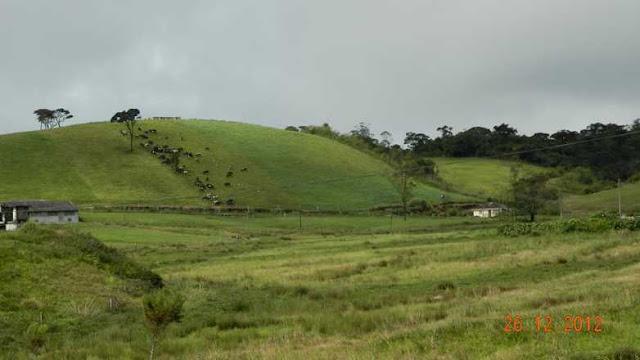 Ambewela, hill country Sri Lanka