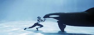 Une photo de couverture Facebook Timeline Baleine