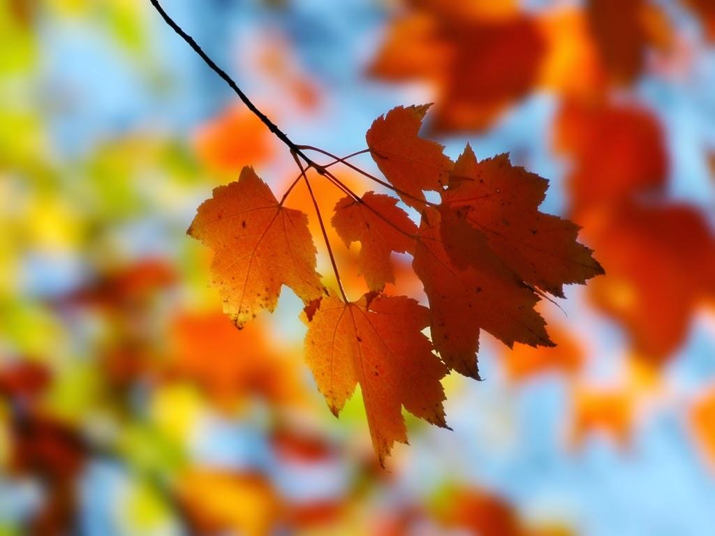 погода в италии в октябре