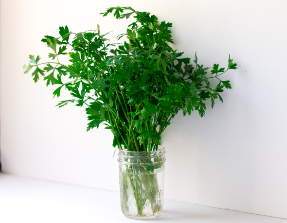 How to Store Fresh Parsley and Cilantro