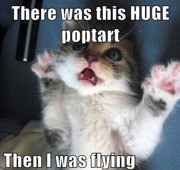60 Funny cat pictures for this week, cat pictures, funny cats
