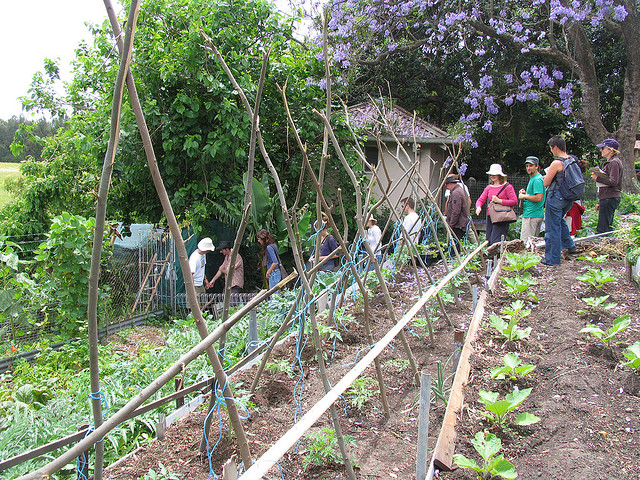 Visit to Glovers St Permaculture Garden