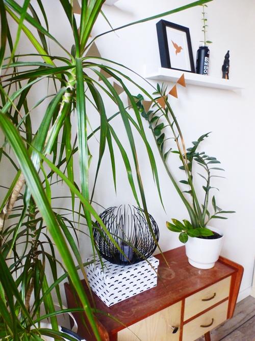 Pflanzen Plants Kerzen und Bilder Wallart
