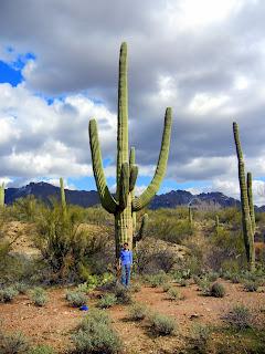 Huge Saguaro, little me