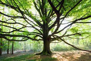 Árboles del Bosque