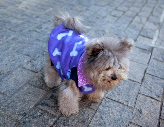 Lilly Foschino Dog fashion model Elvis