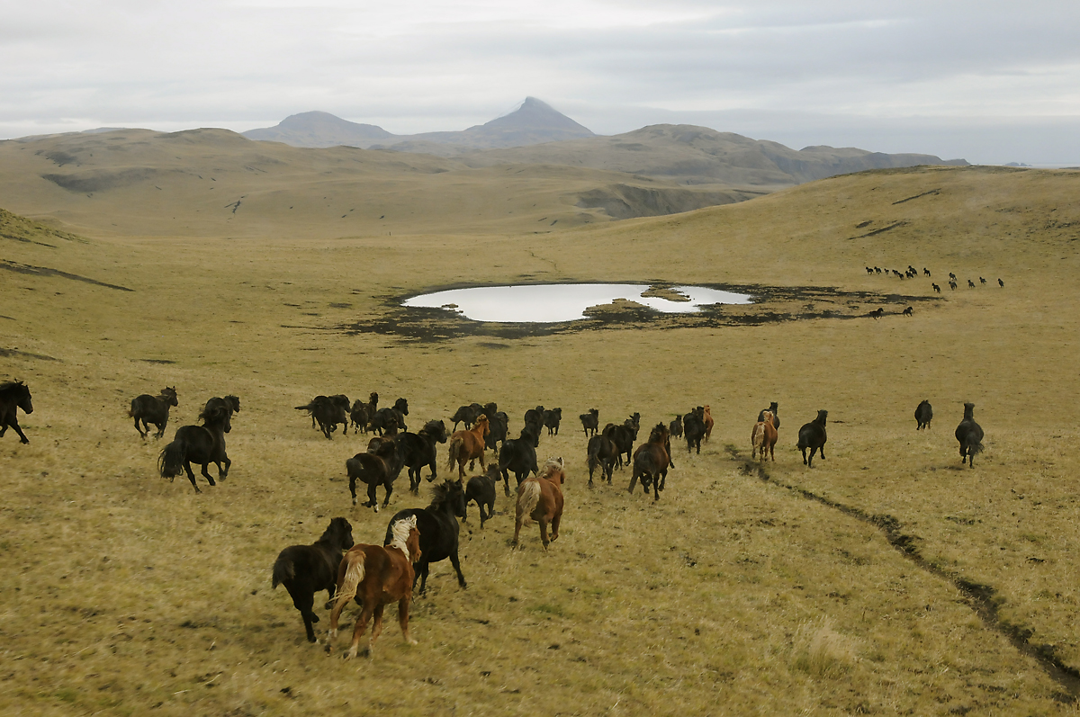 horses running free on the aleutian island of umnak pics