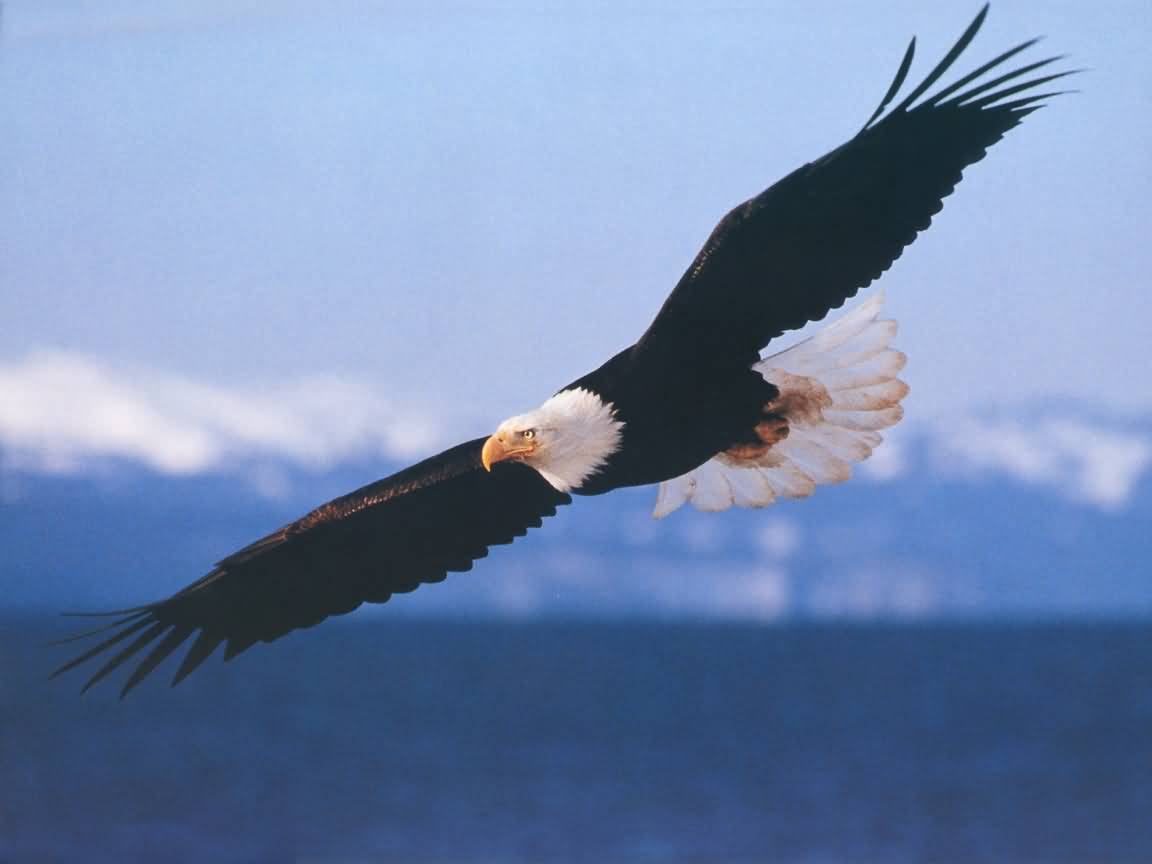 The Essence of Me: 7 Principles of An Eagle