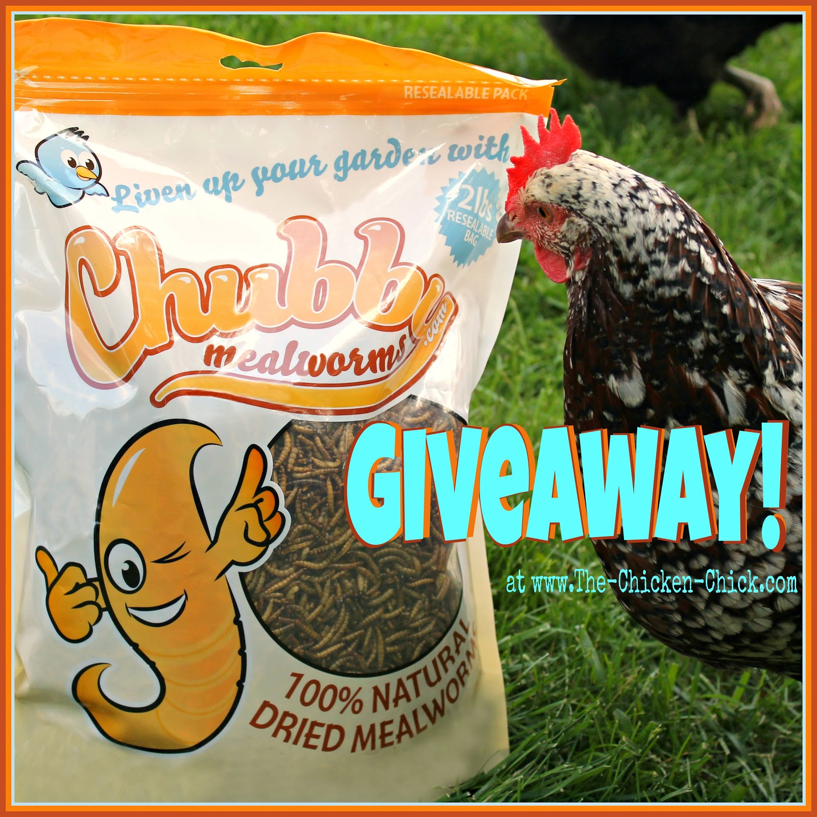 Chubby Mealworms Giveaway at The Chicken Chick®