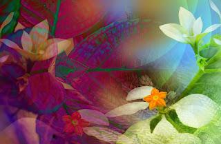 Fondo Romatico flores azucenas