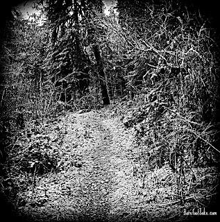 barnes creek trail