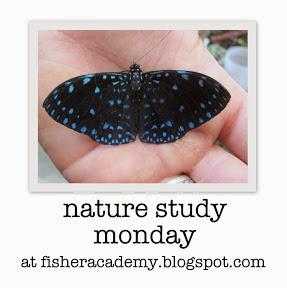 http://fisheracademy.blogspot.com/2014/02/nature-study-monday-squashing.html