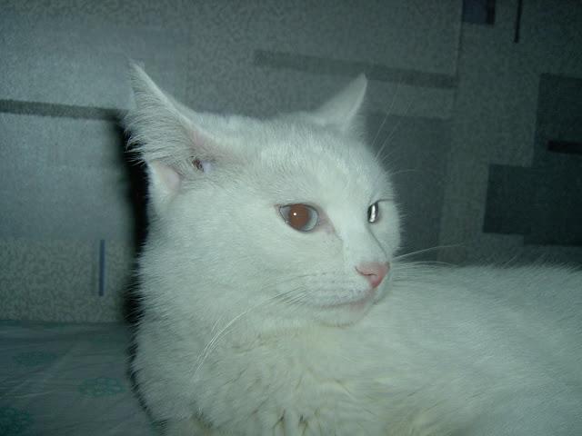 ласковая кошка Машка