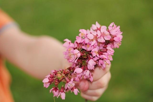 fiore rosa in mano di bimbo