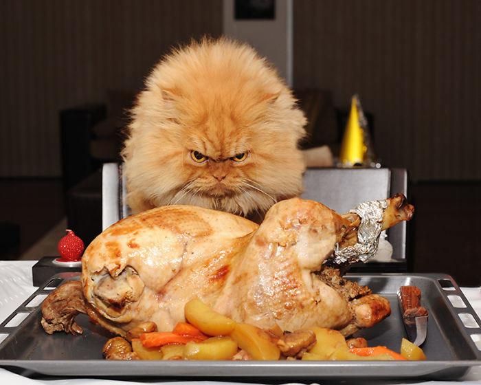 Conoce a Garfi, el gato más enojado del mundo