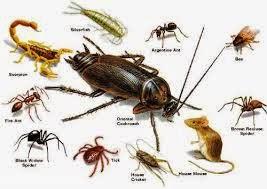 مبيدات حشرية للفئران